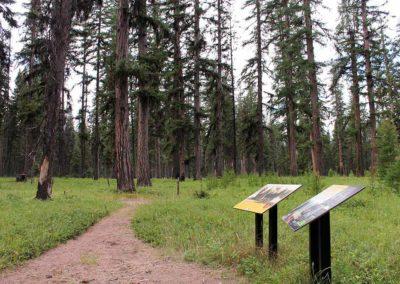 Memorial Grove & Champion Trees